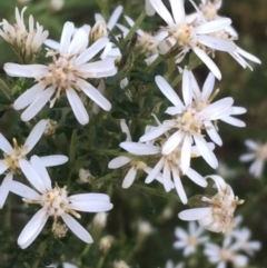 Olearia microphylla (Olearia) at Downer, ACT - 8 Sep 2021 by Ned_Johnston