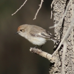 Petroica goodenovii (Red-capped Robin) at Balldale, NSW - 27 Jun 2017 by Kyliegw