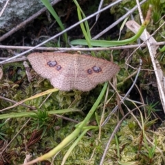 Unidentified Moth (Lepidoptera) (TBC) at Table Top, NSW - 18 Sep 2021 by Darcy