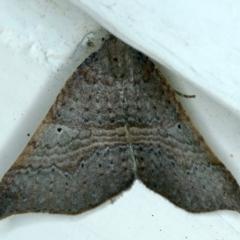 Anachloris uncinata (Hook-winged Carpet) at Ainslie, ACT - 17 Sep 2021 by jbromilow50