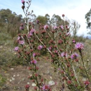 Kunzea parvifolia at Kambah, ACT - 20 Sep 2021