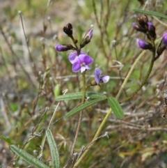 Glycine clandestina (Twining glycine) at Kambah, ACT - 20 Sep 2021 by MatthewFrawley