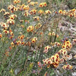 Unidentified Other Wildflower or Herb (TBC) at suppressed by Helberth