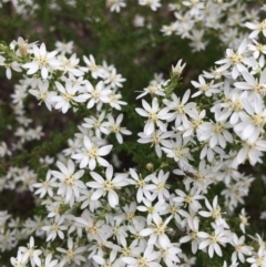 Olearia microphylla (Olearia) at O'Connor, ACT - 24 Sep 2021 by RWPurdie