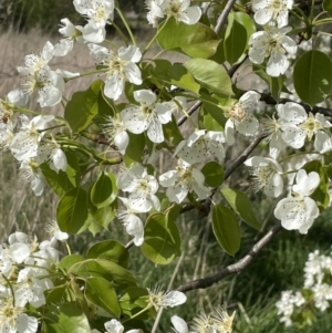 Unidentified Other Tree (TBC) at suppressed by JaneR