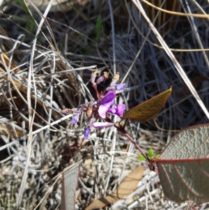 Hardenbergia violacea (TBC) at suppressed by danswell