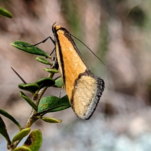 Unidentified Moth (Lepidoptera) (TBC) at suppressed by HelenCross