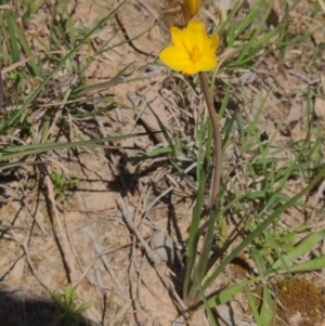 Unidentified Lily & Iris (TBC) at suppressed by HelenCross