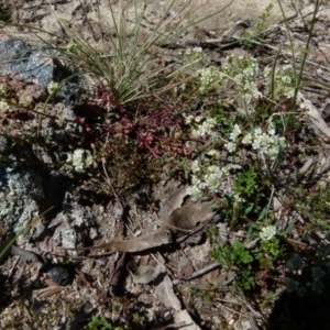 Unidentified Other Shrub (TBC) at suppressed by Paul4K