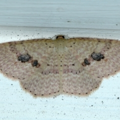 Epicyme rubropunctaria (Red-spotted Delicate) at Ainslie, ACT - 19 Sep 2021 by jbromilow50
