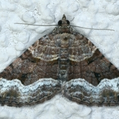 Epyaxa subidaria (Subidaria Moth) at Ainslie, ACT - 19 Sep 2021 by jbromilow50