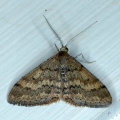 Scopula rubraria (Plantain Moth) at Ainslie, ACT - 23 Sep 2021 by jbromilow50