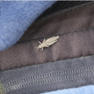 Unidentified Grasshopper (several families) (TBC) at suppressed by AlisonMilton