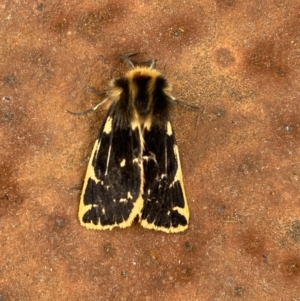 Spilosoma curvata (TBC) at suppressed by Ozflyfisher