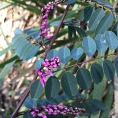 Indigofera australis subsp. australis (Australian Indigo) at Lower Boro, NSW - 24 Sep 2021 by mcleana