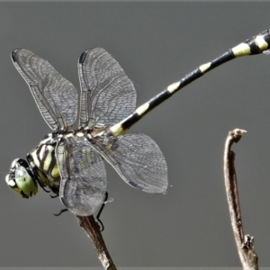 Unidentified Dragonfly (Anisoptera) (TBC) at suppressed by TerryS