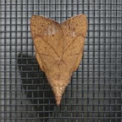 Pararguda nasuta (Wattle Snout Moth) at Googong, NSW - 28 Sep 2021 by WHall