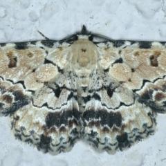 Sandava scitisignata (A noctuid moth) at Ainslie, ACT - 28 Sep 2021 by jbromilow50
