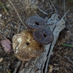 Unidentified Cap on a stem; pores below cap [boletes & stemmed polypores] (TBC) at Boro, NSW - 4 Oct 2021 by Paul4K