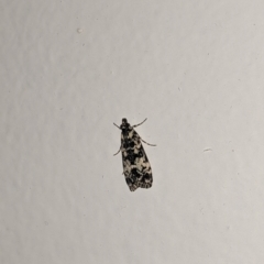 Unidentified Moth (Lepidoptera) (TBC) at East Albury, NSW - 6 Oct 2021 by Darcy