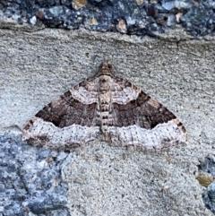 Epyaxa sodaliata (Epyaxa sodaliata) at Pialligo, ACT - 9 Oct 2021 by Ozflyfisher