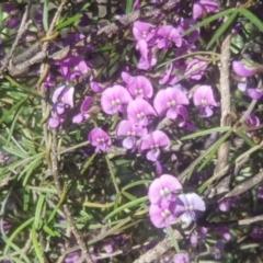 Glycine clandestina (Twining glycine) at Mount Majura - 4 Oct 2021 by MAX