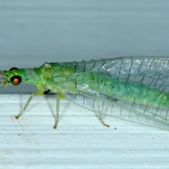 Mallada signatus (Green Lacewing) at Ainslie, ACT - 9 Oct 2021 by jbromilow50