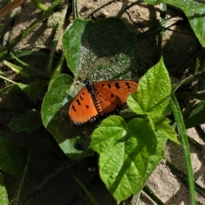 Unidentified Insect (TBC) at suppressed by TerryS