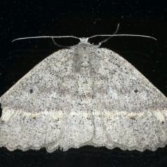 Casbia tetramera at Ainslie, ACT - 17 Oct 2021 by jbromilow50