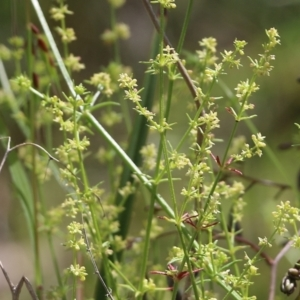 Unidentified Other Wildflower or Herb (TBC) at Glenroy, NSW by KylieWaldon
