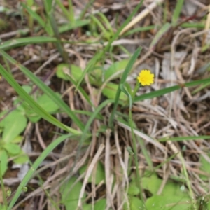 Unidentified Daisy (TBC) at suppressed by KylieWaldon