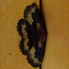 Melanodes anthracitaria (TBC) at Boro, NSW - 16 Oct 2021 by Paul4K
