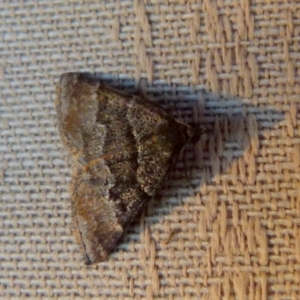 Unidentified Moth (Lepidoptera) (TBC) at suppressed by Paul4K