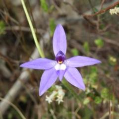 Glossodia major (Wax Lip Orchid) at Kambah, ACT - 18 Oct 2021 by MatthewFrawley