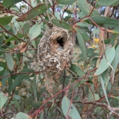Unidentified Small (Robin, Finch, Thornbill etc) (TBC) at Bruce, ACT - 22 Oct 2021 by HelenCross
