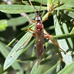 Unidentified Parasitic wasp (numerous families) (TBC) at Jerrabomberra, NSW - 23 Oct 2021 by Steve_Bok