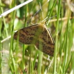 Unidentified Geometer moth (Geometridae) (TBC) at Rendezvous Creek, ACT - 25 Oct 2021 by JohnBundock