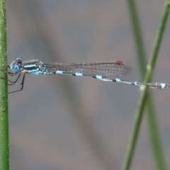 Unidentified Insect (TBC) at suppressed - 23 Oct 2021 by RodDeb